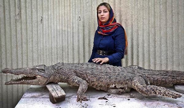 پرورش کروکودیل در ایران