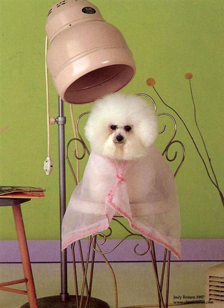 استارت آپ آرایشگری حیوانات به چه صورت است؟