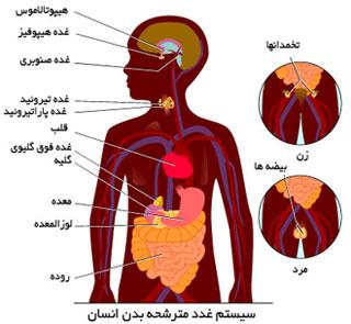 آشنایی با هورمون های بدن و کاربرد آن ها