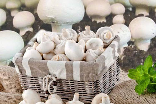 قارچ ماده خوراکی پر کاربرد